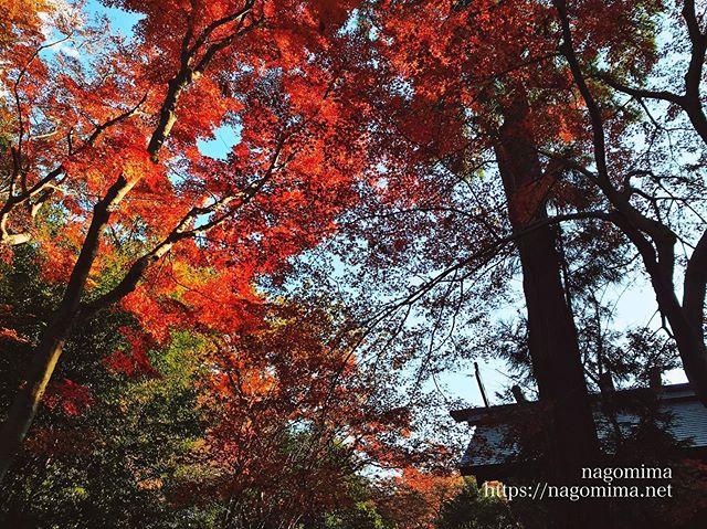 八王子滝山城跡で多摩散歩